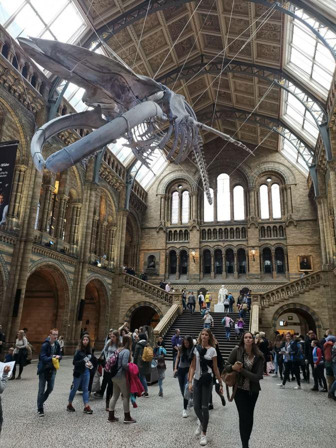 Walvis Natural History Museum London