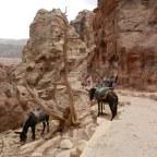 Thee drinken boven de 'Schatkamer' in Petra