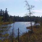 Tip voor Toronto-gangers: bezoek het Algonquin Provincial Park