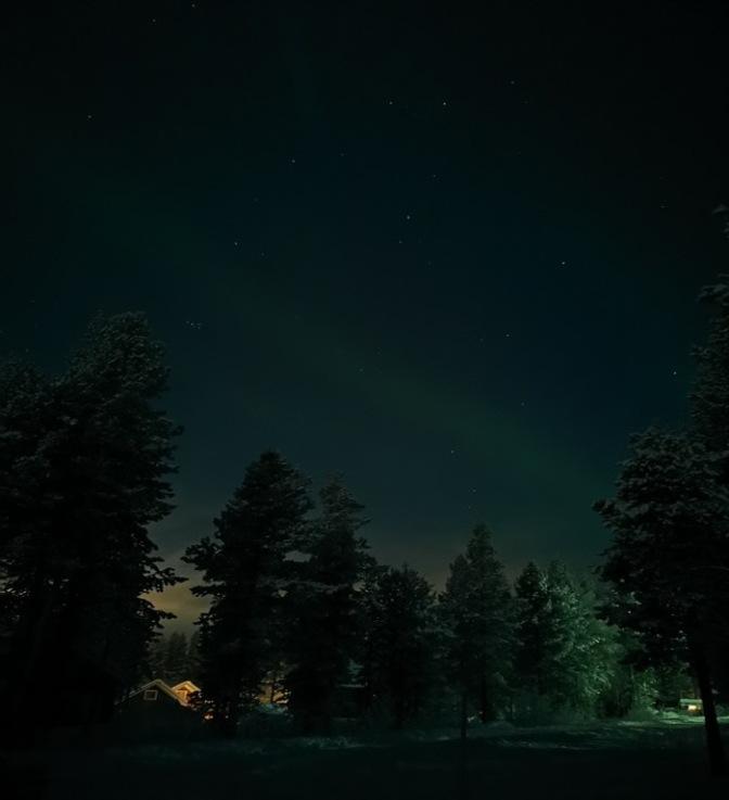 Aurora boven de bomen