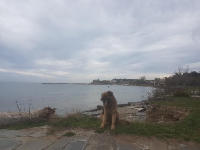 Epanomi hond