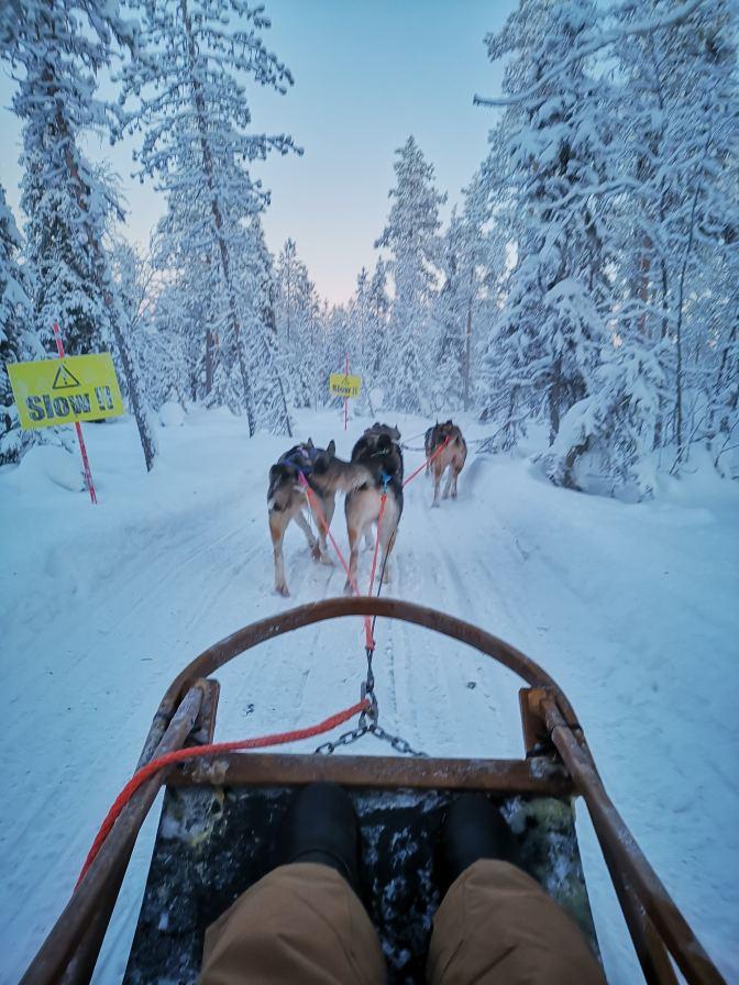 Huskies in actie