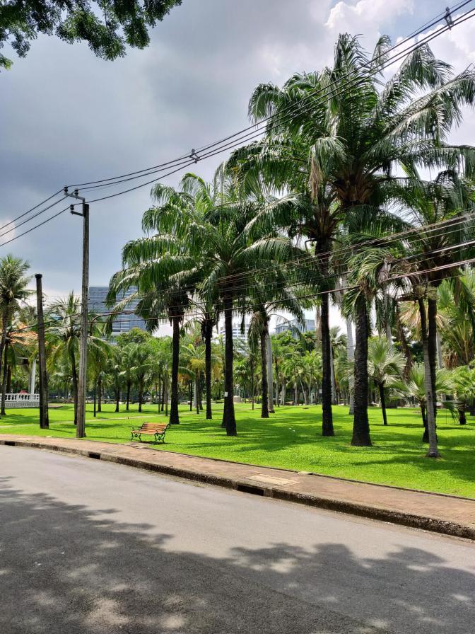 Palmbomen in Lumphini Park