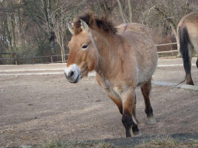 Het zijn zulke mooie paarden