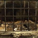 Creepy: dwalen in de catacomben van St. Stephens Cathedral in Wenen