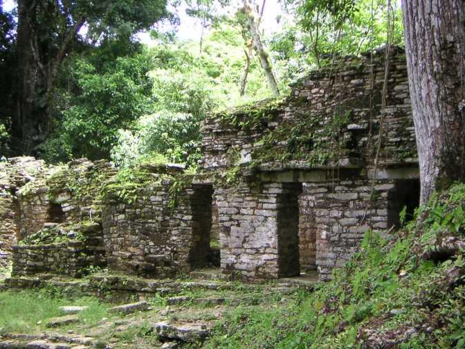 Overwoekerde ruïnes