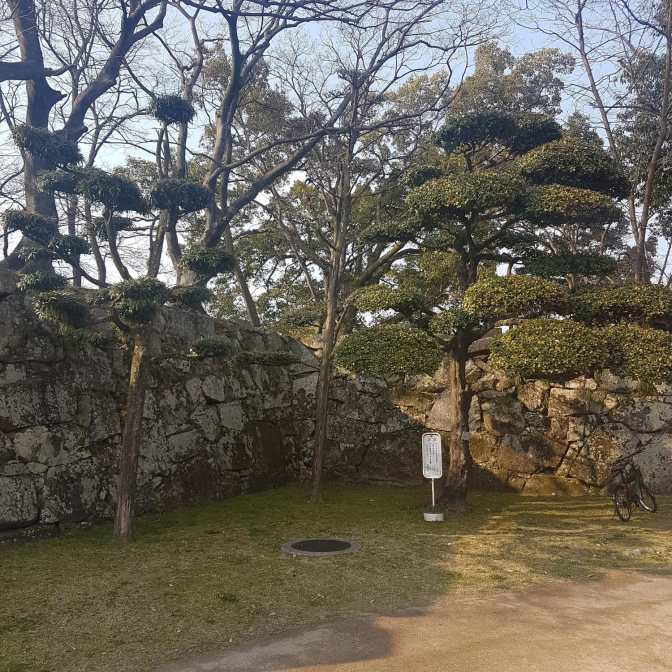 Perfect bijgehouden bomen in Fujinomori