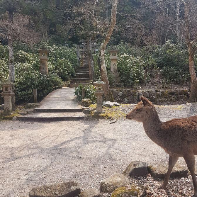 De hertjes zijn de koninkjes van Miyajima