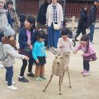 Wil je naar Nara in Japan? Ga naar Miyajima!