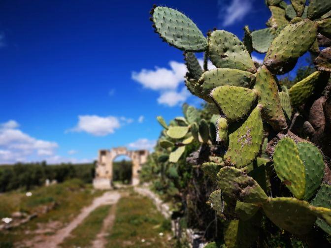 Zo is een cactus toch een stuk mooier