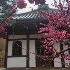 De reis naar Japan die niet door kon gaan